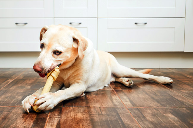 Niedobór wapnia u psa