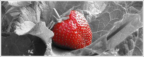 Papic Schwarz Weiß Fotos Mit Rotem Farbeffekt