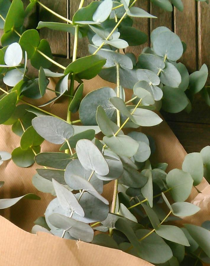 Cómo conservar y mantener el olor de la ramas de eucalipto