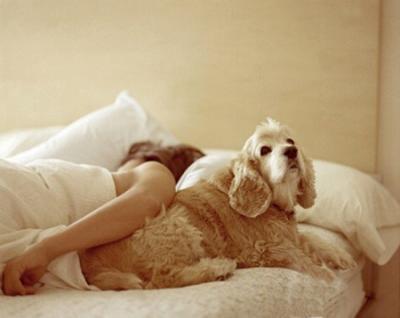 Vì sao không nên cho trẻ ngủ cùng thú cưng