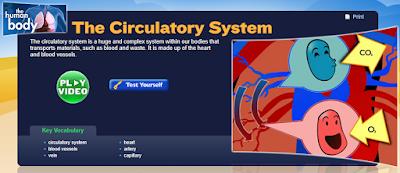http://studyjams.scholastic.com/studyjams/jams/science/human-body/circulatory-system.htm