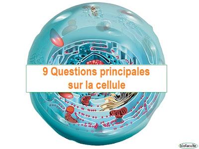 Questions principales sur la cellule