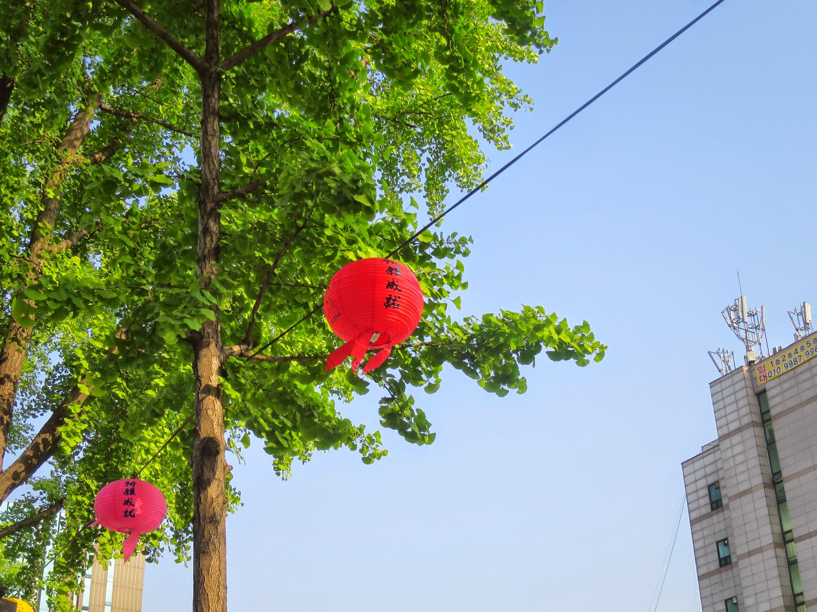 Lanterns against trees and a gorgeous blue sky