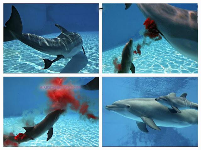 nacimiento de un delfin