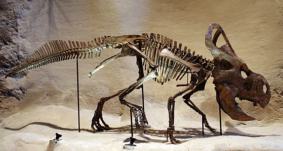Protoceratops Dinozoru Özellikleri