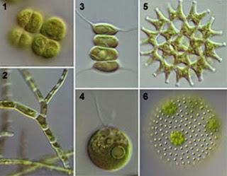 वनस्पति जगत क्या है | परिभाषा | शैवाल), क्लोरोफाइसी | फियोफाइसी | रोडोफाइसी