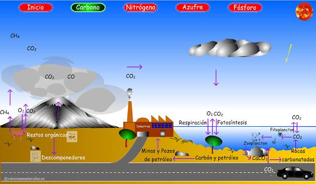 Enlace al Ciclo del Carbono (actualización)