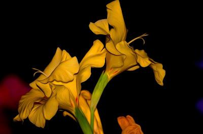 Gladiolen, gladioli, swaardlelies, gladiole, gladiolus, gladioolide, gladiolukset, glaïeuls, γλαδιόλες, glaidiólais, gladiols, gladiolu, kardeliai, gladioler, mieczyki, gladíolos, gladiole, Гладиолусы, Гладиоли, mečíky, гладіолуси, kardvirág, a, гладыёлусы, , グラジオラス、