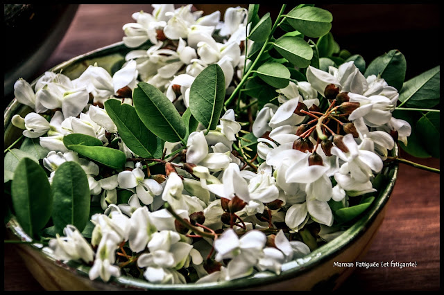 fleurs acacia
