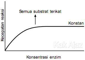 Grafik kecepatan reaksi terhadap konsentrasi enzim, semua substrat terikat