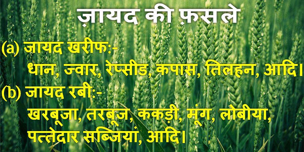 Jayad Ki Fasal