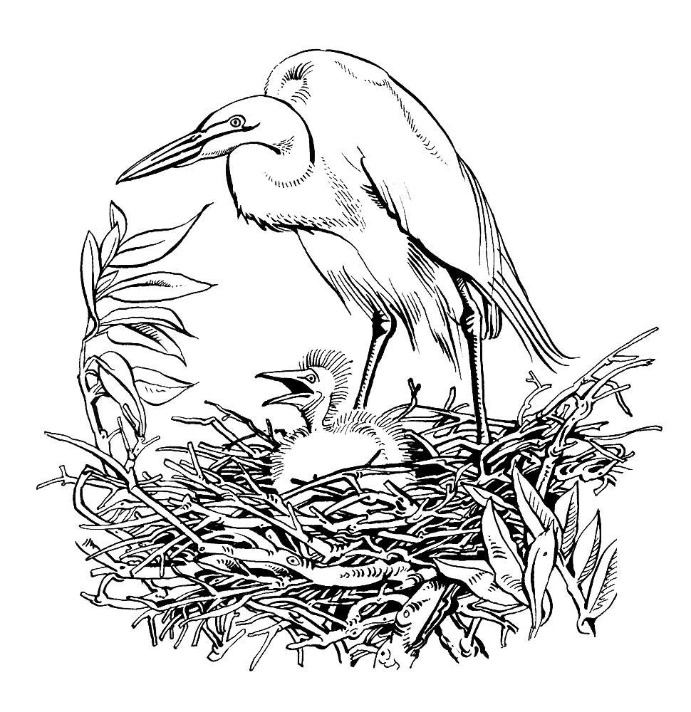Mewarnai Gambar Burung Bangau 3