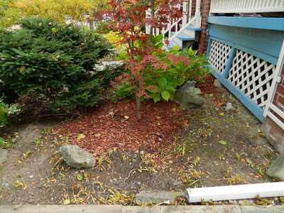 Toronto Fall Cleanup in a Lawrence and Yonge Front Yard after by Paul Jung Gardening Services