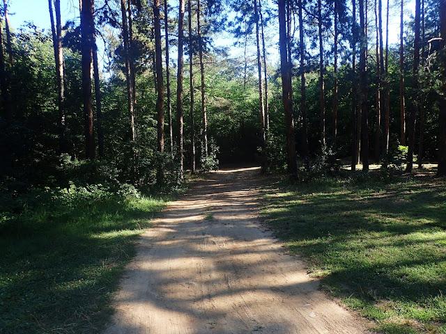 Bułgaria, polana w lesie. Okolice Kazanłyku