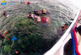 wisatawan karimunjawa snorkeling