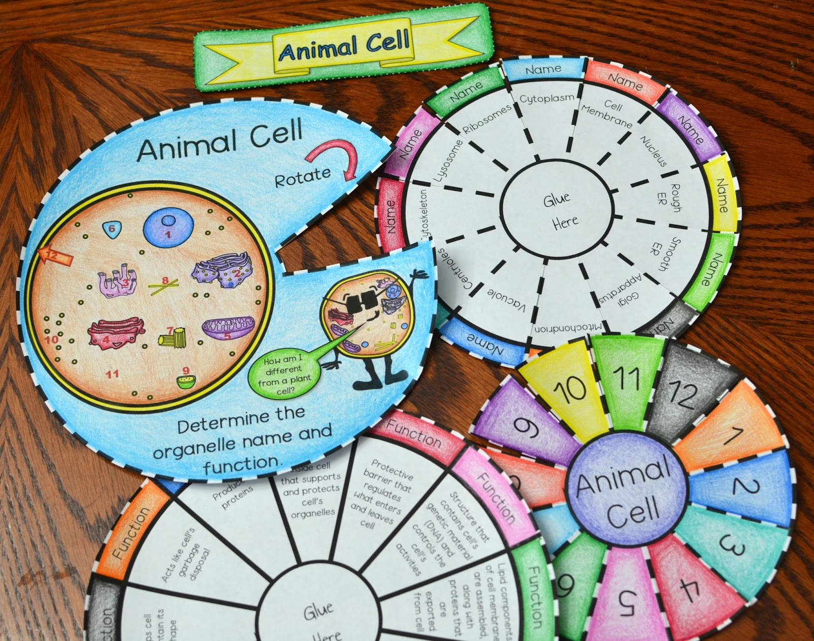 Animal and Plant Cell Foldables