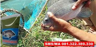 Umpan Pelet Serbuk Paling Jitu Untuk Ikan Nila