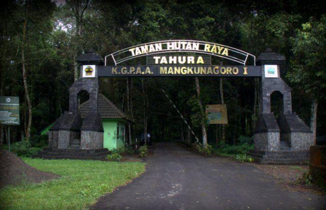 Taman Hutan Raya (Tahura) K.G.P.A.A. Mangkunagoro I