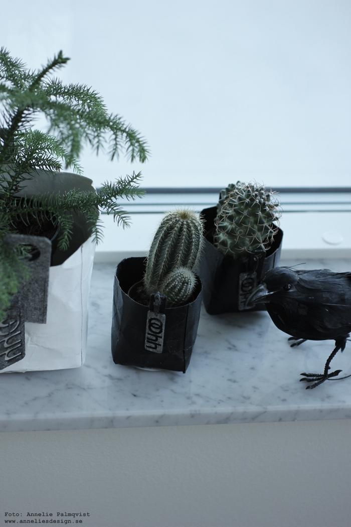 Oohh kruka, krukor, annelies design, webbutik, webshop, nätbutik, nätbutiker, nettbutikk, webbutiker, inredning, kråka, fågel, fåglar, fönsterbräda, fönster, fönstret, rumsgran, växter, kaktus, kaktusar, minikaktus, minikaktusar, små krukor,