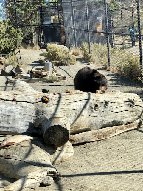 Animal Ark Reno