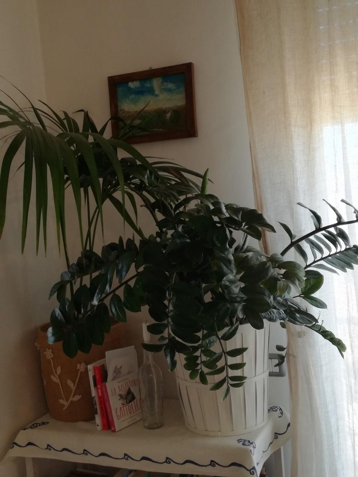 Come Far Morire Una Pianta foglie e fusa: zamioculcas! una pianta da dimenticare!