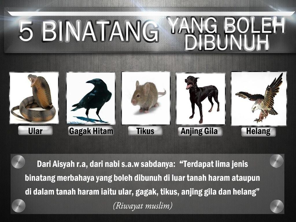 Haiwan boleh dibunuh