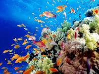 ricerca sul mare e i suoi fondali per la scuola