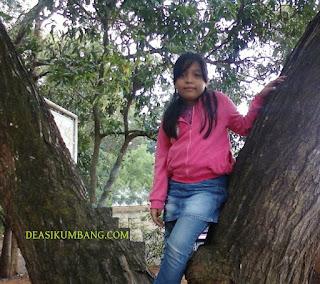 Tiket Masuk Penangkaran Elang Di Hutan Pinus Cigombong Bogor