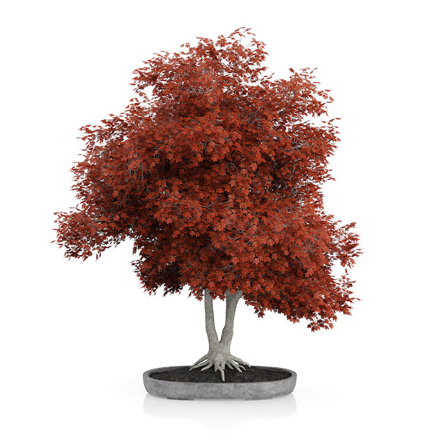 3D model free -  Plants_19