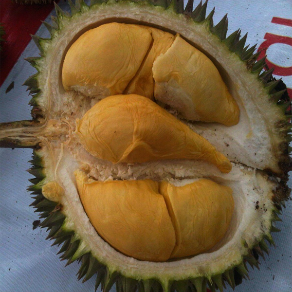 Durian Bawor, Khasiat Durian Bawor, Manfaat Durian Bawor