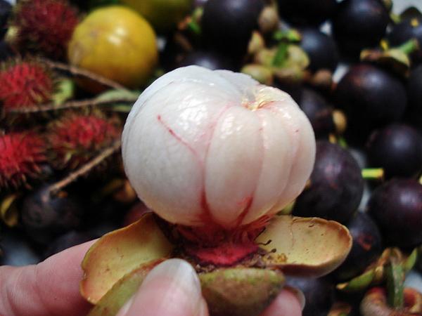 Ketahui rahsia di sebalik buah Manggis