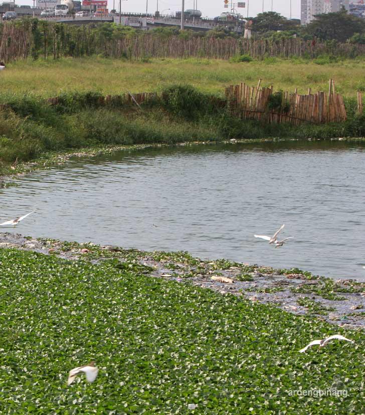 bangau putih taman kota ria rio jakarta