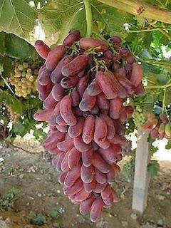 husain grape
