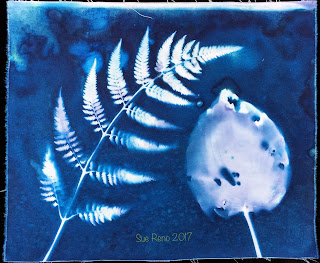 Wet cyanotype_Sue Reno_Image 203