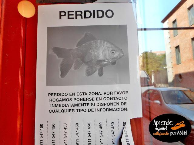 perdido pez