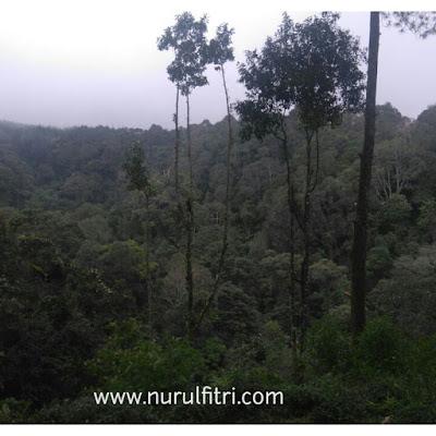 Menikmati Pemandangan Hutan Pinus Cikole Bandung