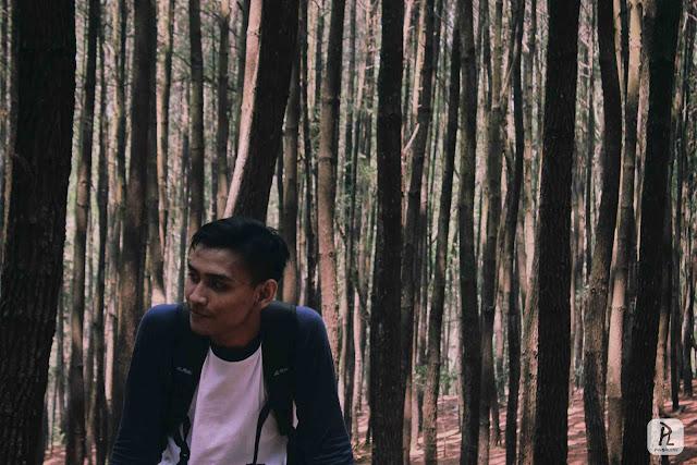 hutan pinus mangunan, bantul, jogja www.panorlens.com