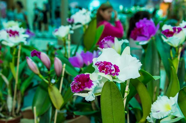 Feira de Orquídeas volta ao Pátio Brasil nesta quinta