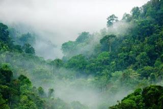 gambar bioma hutan basah