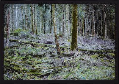Broderie contemporaine, sous bois, forêts