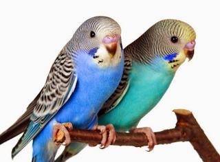How to teach a bird to talk