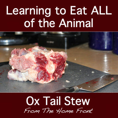 Learn to Eat ALL of the Animal: Ox Tail Stew