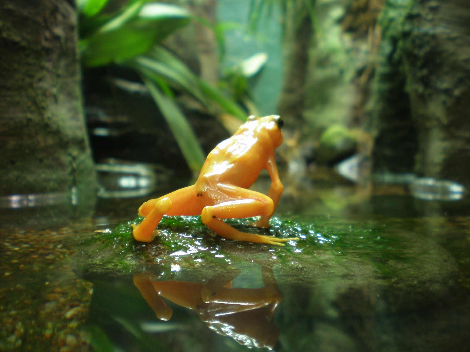The most poisonous species of frogs in the world 72