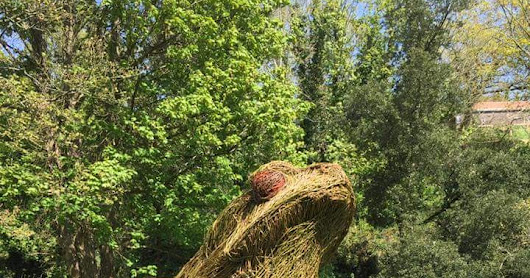 Willow Crapaud for Jersey National Trust