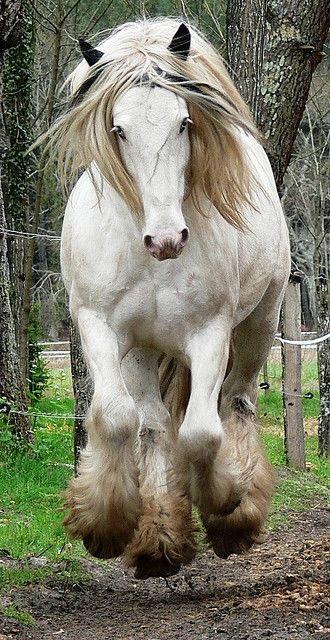 Belos Cavalos