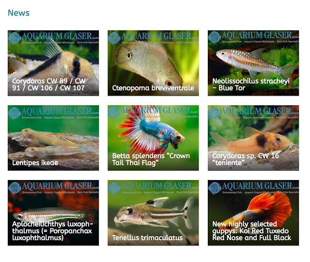 Рыбки для аквариума