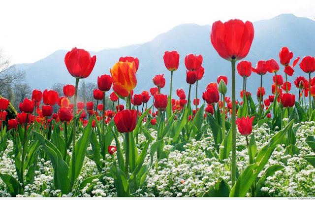 hình ảnh hoa đẹp nhất thế giới 8