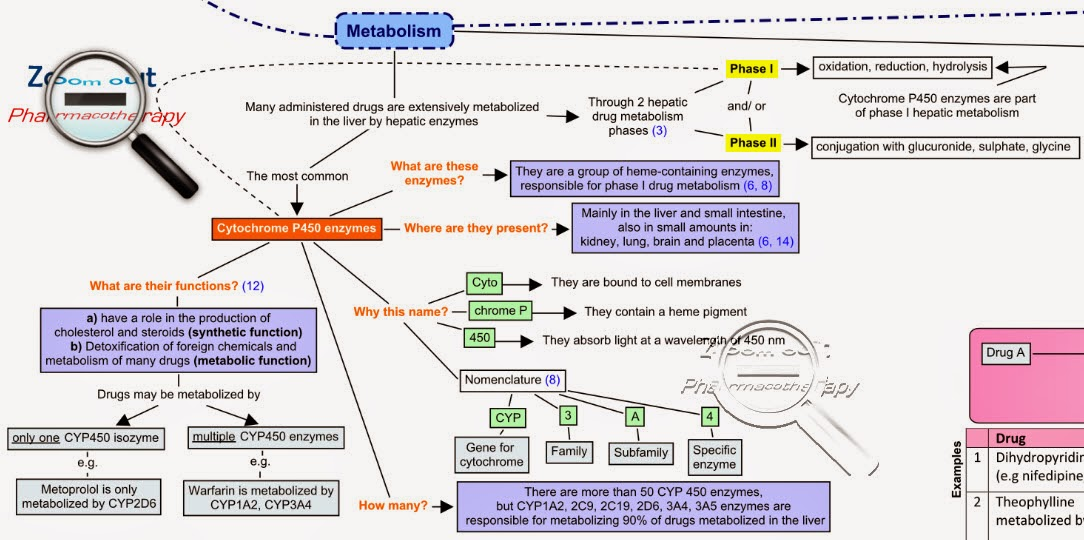 CYP450_metabolism_drug_interactions_zoom_out_pharmacotherapy