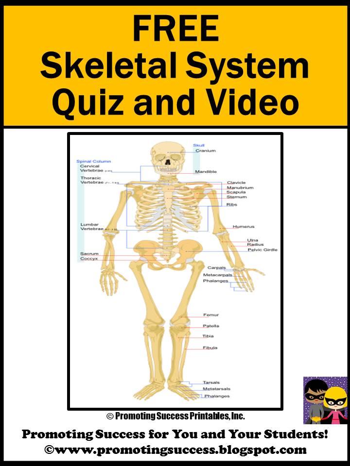 Skeletal Bpic Bblog