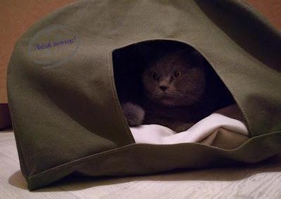 jak zrobić namiot dla kota